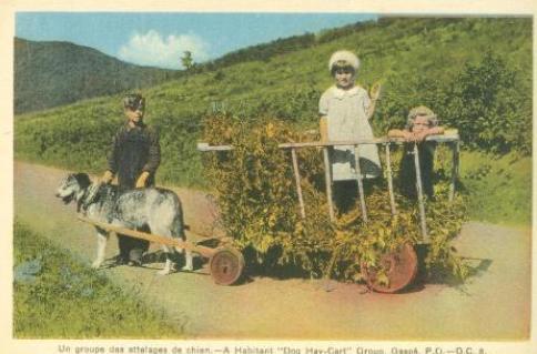 "Vintage Postcard Collection"""