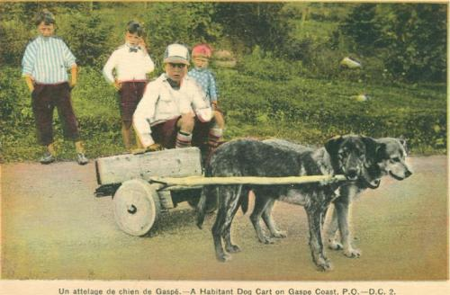 Retro Vintage Postcard: Two children in A Rustic Habitant Dog Cart in Gaspe, Quebec | Traditional Quebec Dog Carts
