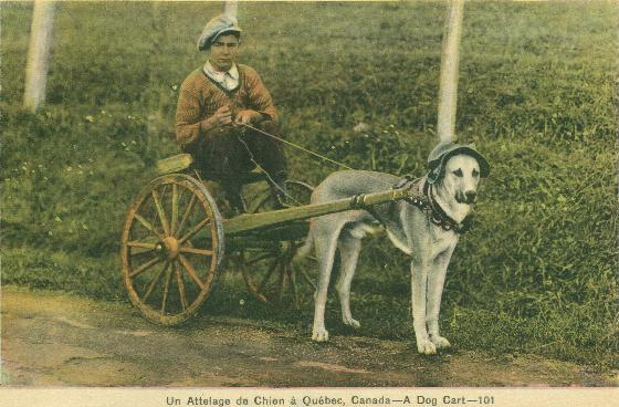 Vintage retro postcard: A Dog Cart - possibly a racing sulky   Traditional Quebec Dog Carts
