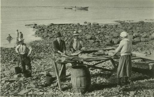 marinage-du-poisson-gaspe-que-curing-fish1