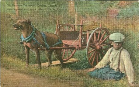Retro Vintage postcard: a farm boy sits next to dog cart   Campagnard avec son attelage   Traditional Quebec Dog Carts