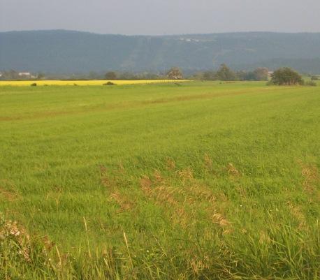 longfarm