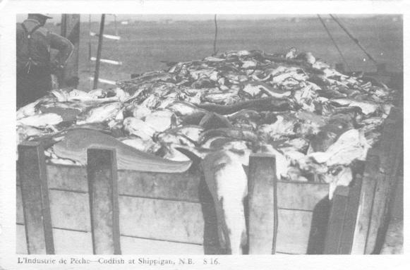 L'Industrie de Peche - Codfish at Shippagan, N.B.