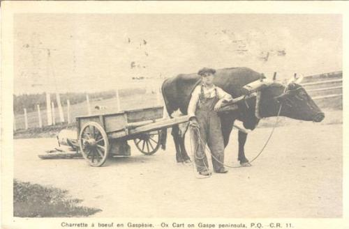 Vintage postcard of a pioneer farm boy and ox cart - hauling logs | Charrette a boeuf en Gaslesie, Quebec