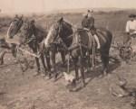 Postcard, horses. Property: Kinexxions