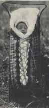 Quebec Indians